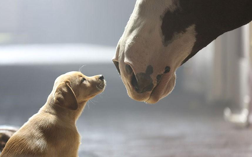 Häst 8