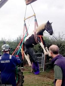 Hästräddning 3